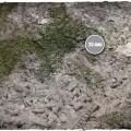 Terrain Mat Cloth - Medieval Ruins - 90x90 1