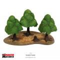 Verdant Forest 1