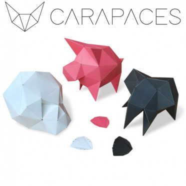 Carapaces By Doug : Blanc