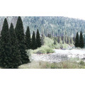 Woodland Scenics - Evergreen Blend 0